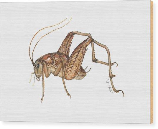 Camel Cricket Wood Print
