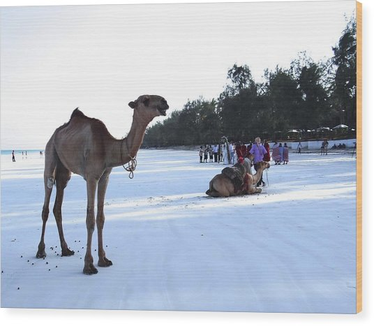 Camel On Beach Kenya Wedding 5 Wood Print