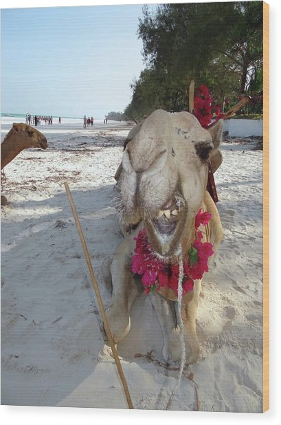 Camel On Beach Kenya Wedding2 Wood Print