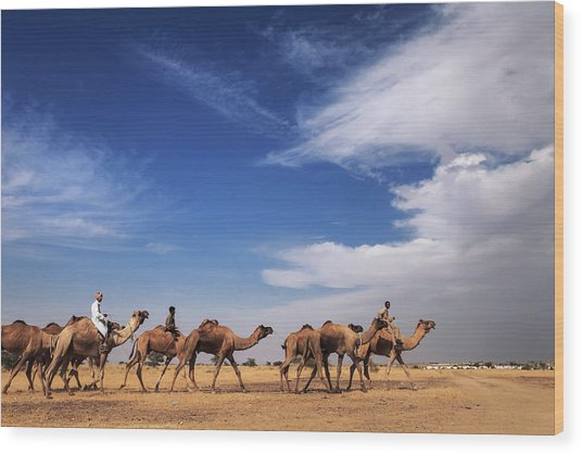 Camel Raiders, Jaisalmer, India Wood Print