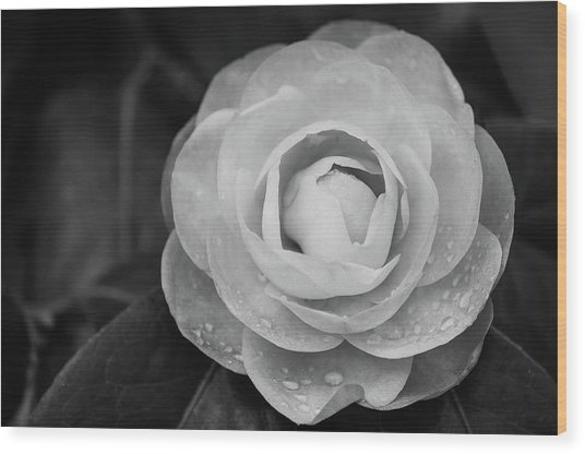 Camellia Black And White Wood Print