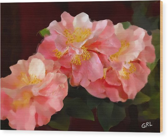 Camellias 1cmods1b Digital Painting Gulf Coast Florida Wood Print