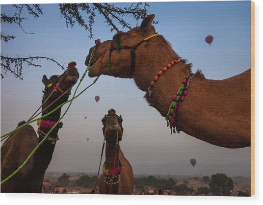 Camels And Balloons Wood Print