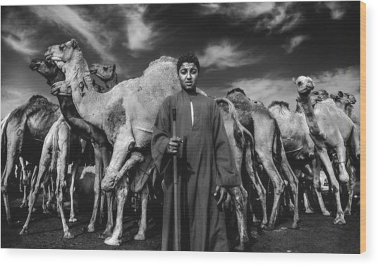 Camels Gaurdian Wood Print