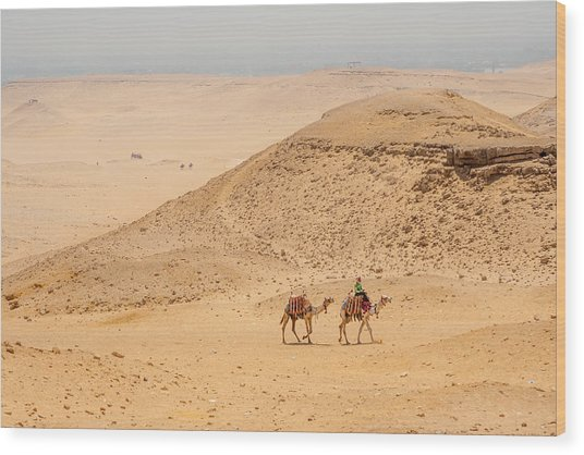 Camels In The Egyptian Desert Wood Print