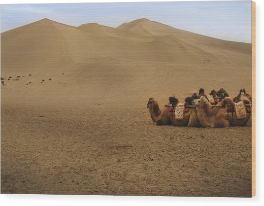 Camels Of The Silk Route Wood Print