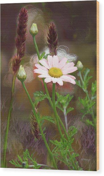 Camomile And Grass Wood Print by Joe Halinar