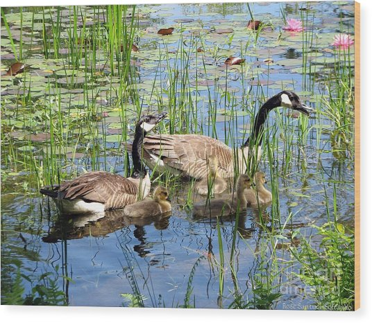 Canada Geese Family On Lily Pond Wood Print