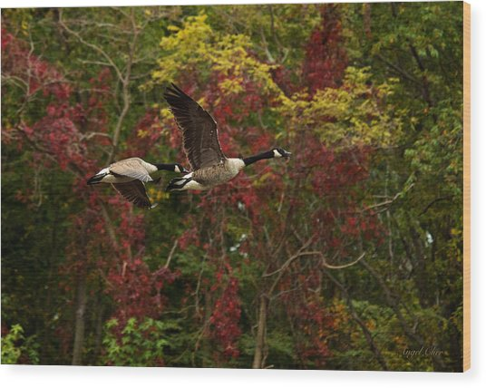 Wood Print featuring the photograph Canada Geese In Autumn by Angel Cher