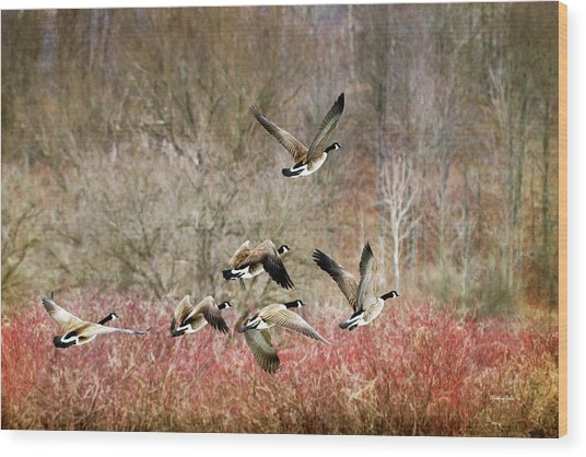 Canada Geese In Flight Wood Print
