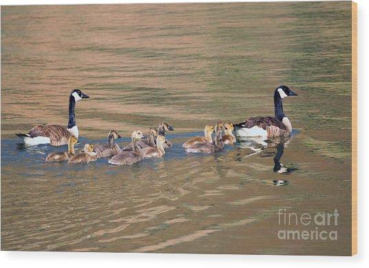 Canada Goose Family Wood Print
