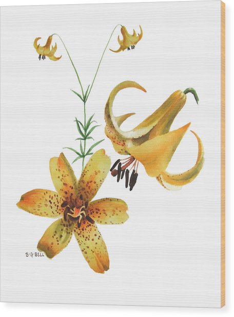 Canada Lily Composition Wood Print
