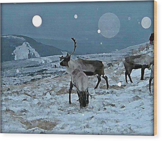 Canadian Elk By Moonlight Wood Print