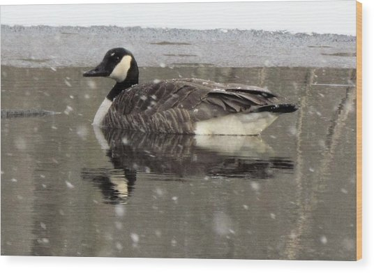 Canadian Goose In Michigan Wood Print