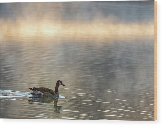 Canadian Goose In Misty Lake Wood Print