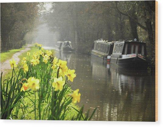 Canalside Daffodils Wood Print