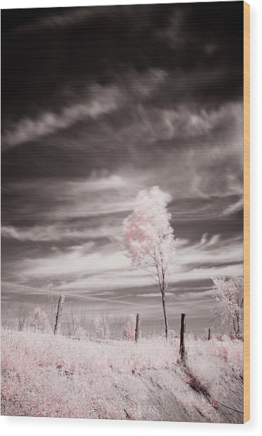 Candy Cotton Dream Wood Print by Lea Seguin