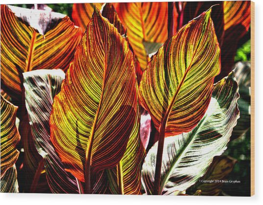 Wood Print featuring the photograph Canna 26106hdr by Brian Gryphon