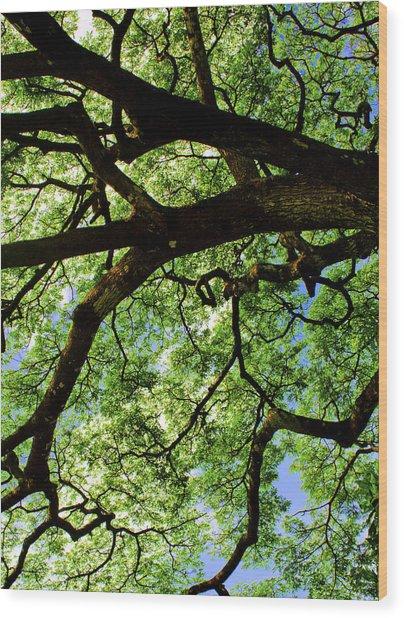 Canopy 1 Wood Print