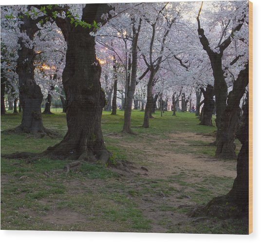 Canopy Of Pink 8x10 Wood Print