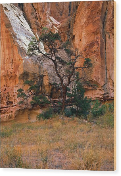 Canyon View With Tree Wood Print