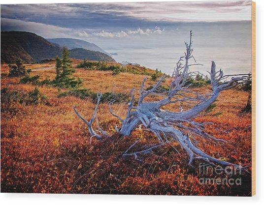 Cape Breton Highlands Wood Print