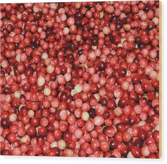 Cape Cod Cranberries Wood Print