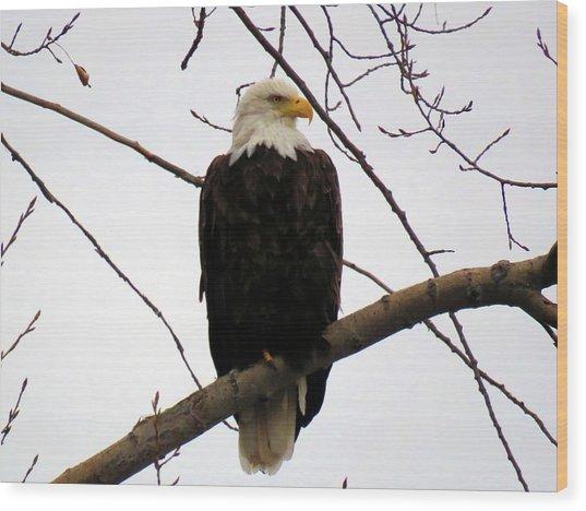 Cape Eagle Wood Print