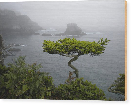 Cape Flattery Noble Wood Print