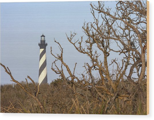 Cape Hatteras Lighthouse Through The Brush Wood Print