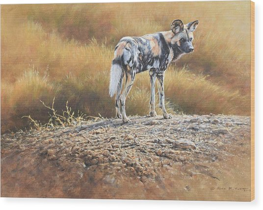 Cape Hunting Dog Wood Print