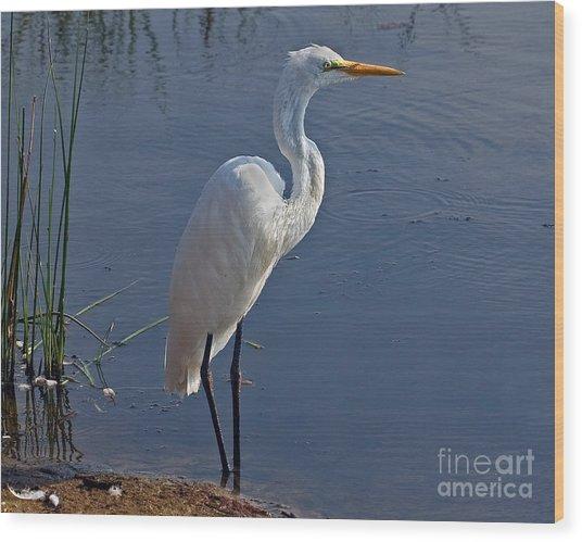Cape May Egret Wood Print