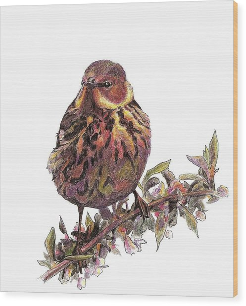 Cape May Warbler Wood Print