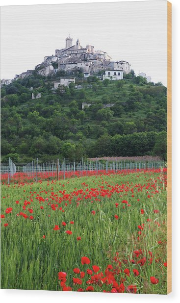 Capestrano And Poppy Fields Wood Print by Tom  Doherty