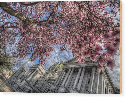 Capitol Blossoms Wood Print