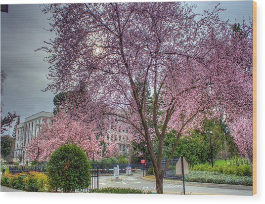 Capitol Tree Wood Print by Randy Wehner Photography