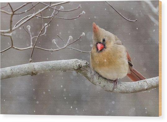 Cardinal And Falling Snow Wood Print