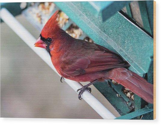 Cardinal Close Up Wood Print
