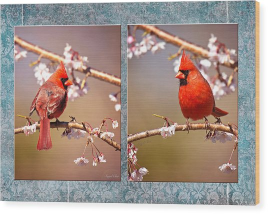 Wood Print featuring the photograph Cardinal Collage by Angel Cher