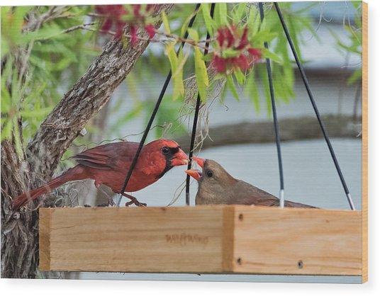 Cardinal Feeding  Wood Print