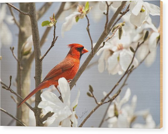 Wood Print featuring the photograph Cardinal In Magnolia by Angel Cher