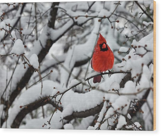 Cardinal In The Snow 2 Wood Print