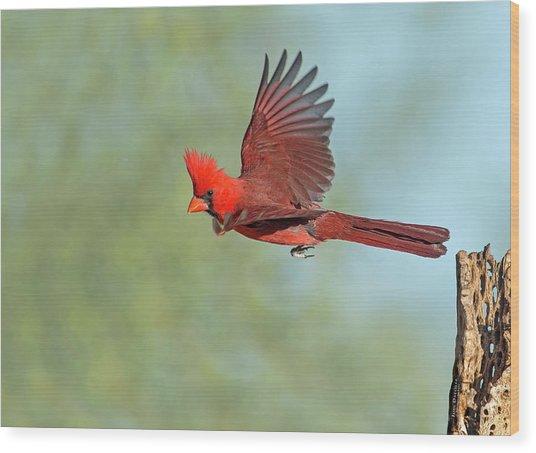 Cardinal On A Mission Wood Print