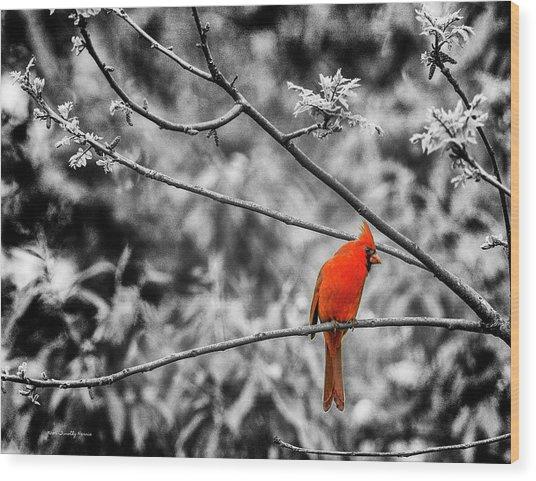 Cardinal... Wood Print