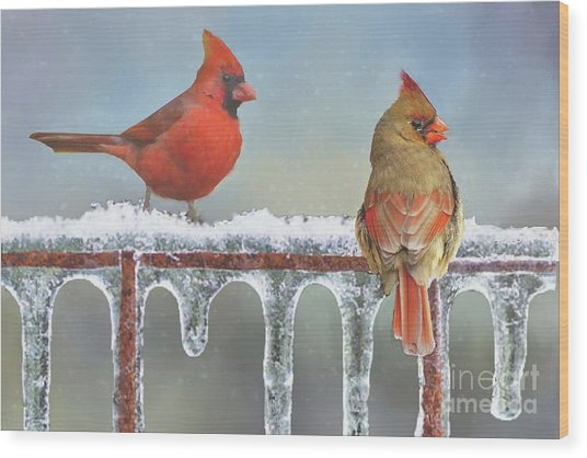Cardinals And Icicles Wood Print