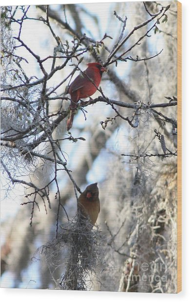 Cardinals In Mossy Tree Wood Print