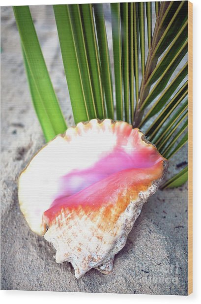 Caribbean Conch Wood Print by John Rizzuto