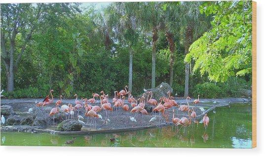 Caribbean Flamingos Wood Print by Tammy Chesney