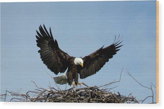 Cape Vincent Eagle Wood Print