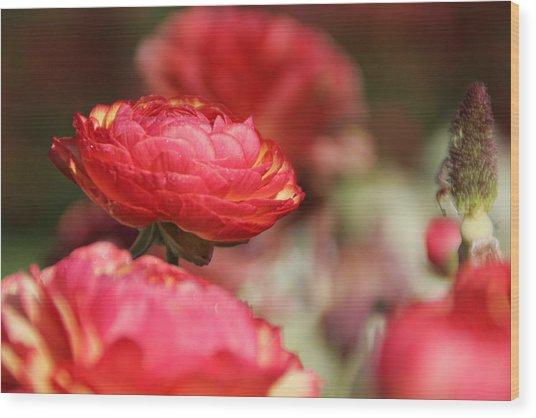 Carnival Of Flowers 06 Wood Print